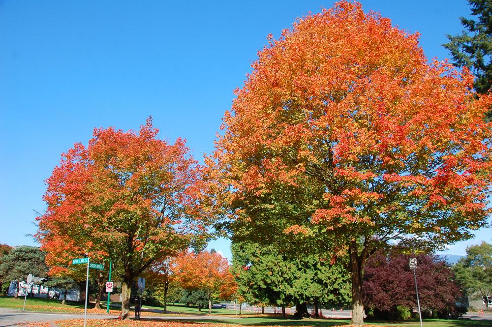 街樹與社區導覽