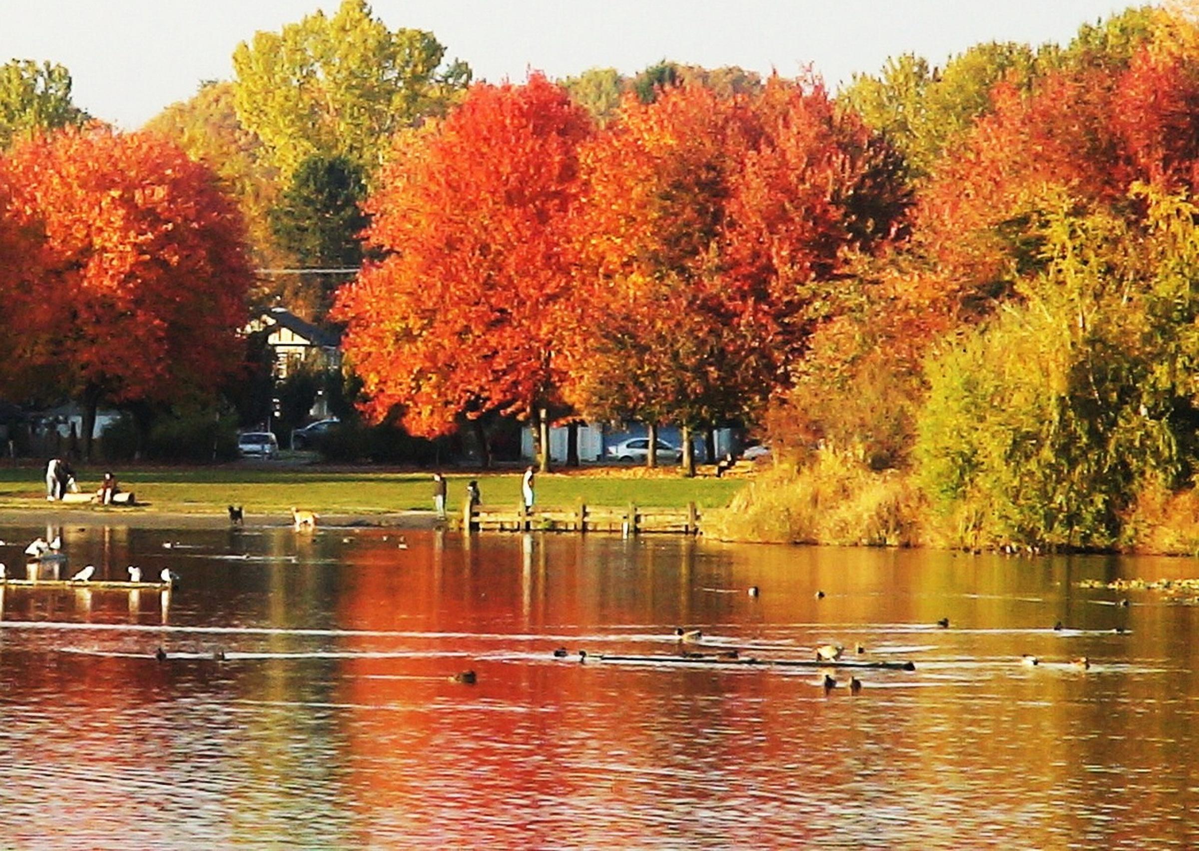 扁柏屋區秋色與街樹導覽