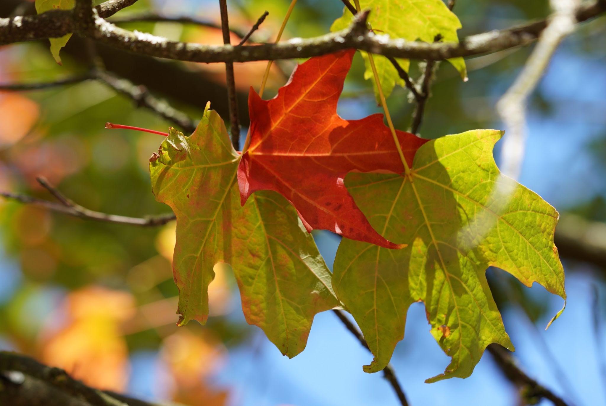 離層 & 秋色