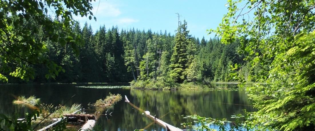 NatureKids - Green Club Joseph Lin Legacy Fund 獎學金 - 開放申請中