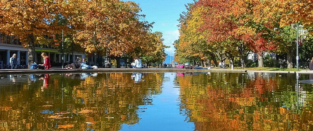 【2021溫哥華秋楓賞】社區秋色街樹導覽 - 精彩內容等你來