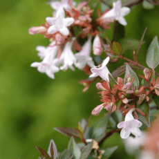秋季吸引蜜蜂的花