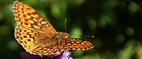 Butterfly5534b